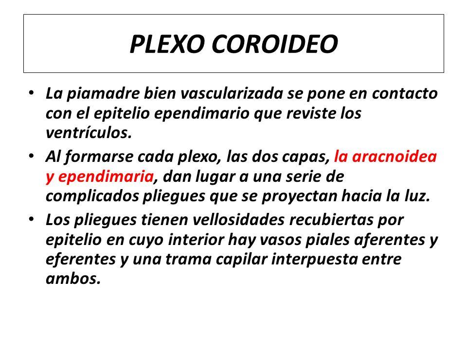 PLEXO COROIDEO La piamadre bien vascularizada se pone en contacto con el epitelio ependimario que reviste los ventrículos. Al formarse cada plexo, las
