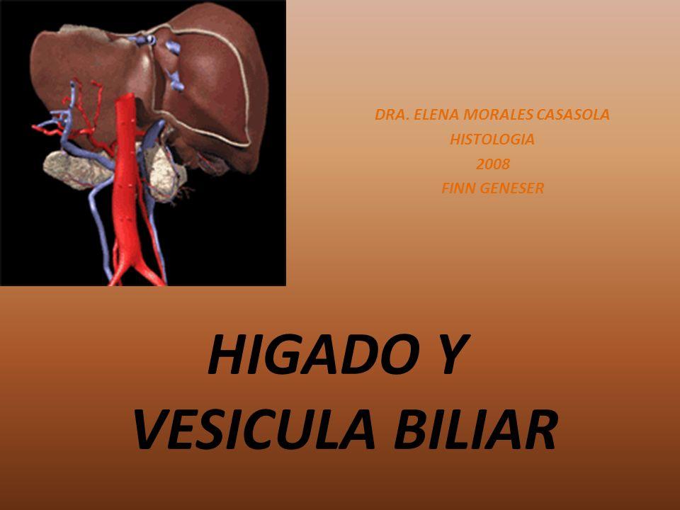 HIGADO Y VESICULA BILIAR DRA. ELENA MORALES CASASOLA HISTOLOGIA 2008 FINN GENESER