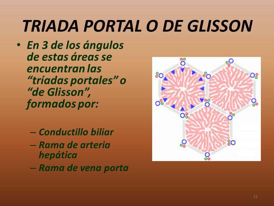 TRIADA PORTAL O DE GLISSON En 3 de los ángulos de estas áreas se encuentran las tríadas portales o de Glisson, formados por: – Conductillo biliar – Ra