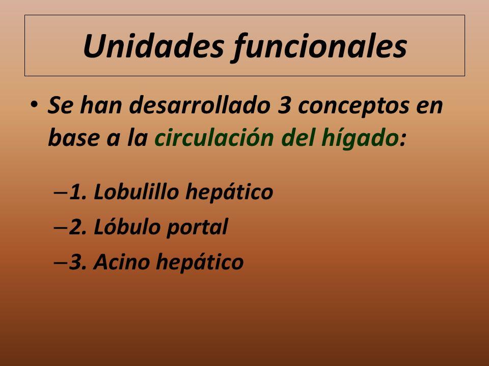 Unidades funcionales Se han desarrollado 3 conceptos en base a la circulación del hígado: – 1. Lobulillo hepático – 2. Lóbulo portal – 3. Acino hepáti