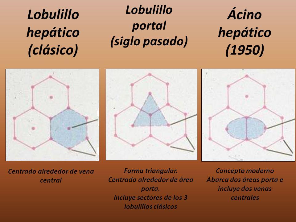 Lobulillo hepático (clásico) Lobulillo portal (siglo pasado) Ácino hepático (1950) Centrado alrededor de vena central Forma triangular. Centrado alred