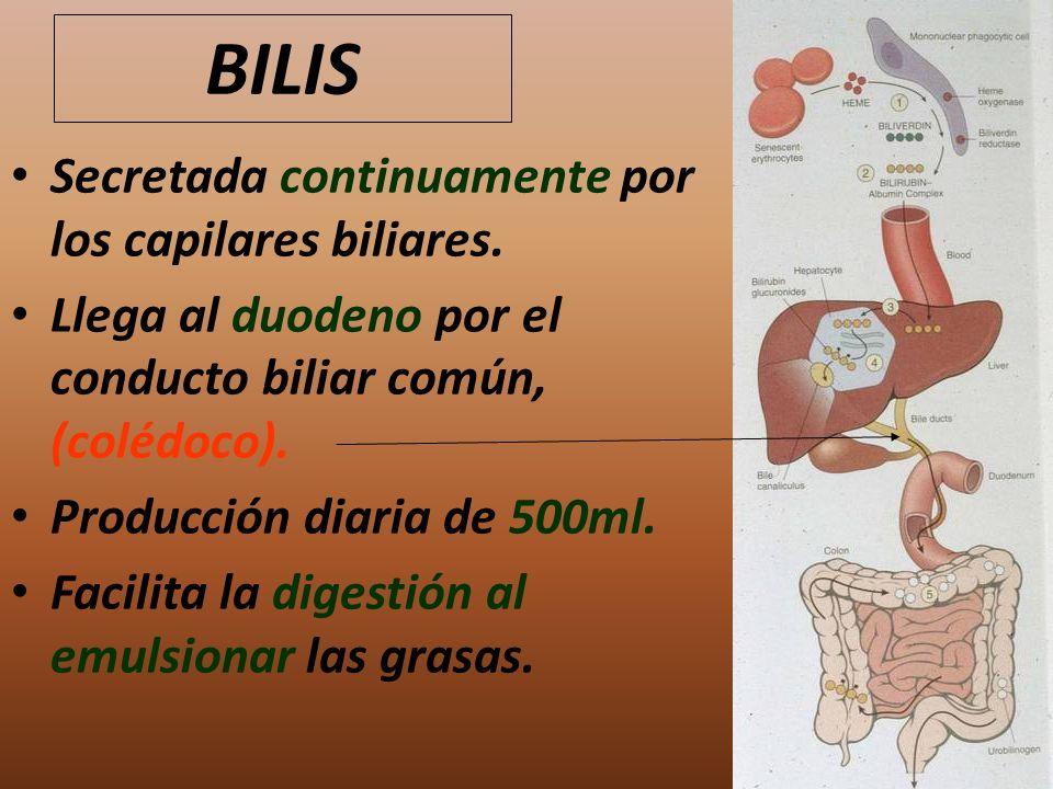 BILIS Secretada continuamente por los capilares biliares. Llega al duodeno por el conducto biliar común, (colédoco). Producción diaria de 500ml. Facil