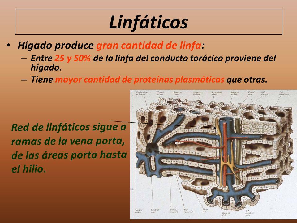Linfáticos Hígado produce gran cantidad de linfa: – Entre 25 y 50% de la linfa del conducto torácico proviene del hígado. – Tiene mayor cantidad de pr