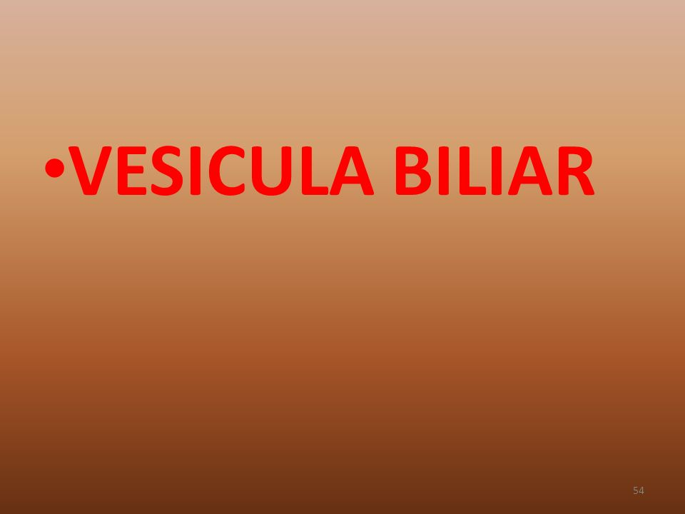 VESICULA BILIAR 54