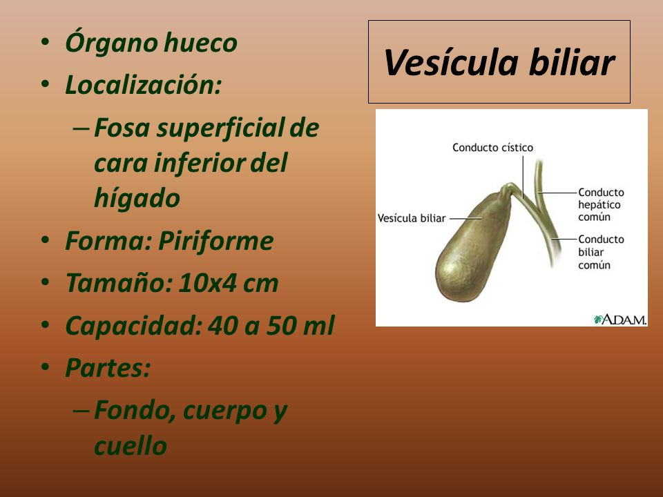 HIGADO Y VESICULA BILIAR - ppt video online descargar