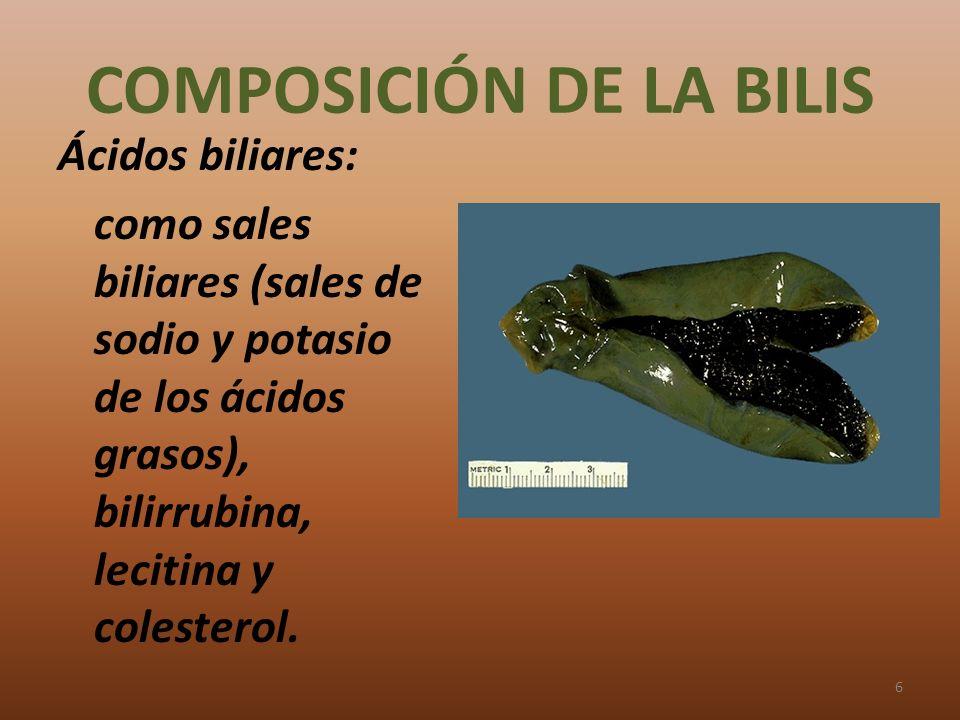 COMPOSICIÓN DE LA BILIS Ácidos biliares: como sales biliares (sales de sodio y potasio de los ácidos grasos), bilirrubina, lecitina y colesterol. 6
