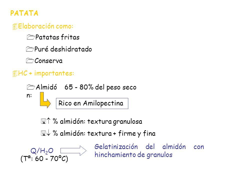 PATATA 4Elaboración como: 1Puré deshidratado 4HC + importantes: 1Almidó n: 1Patatas fritas 1Conserva 65 - 80% del peso seco Rico en Amilopectina Q/H 2