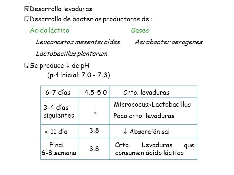 <Desarrollo levaduras <Desarrollo de bacterias productoras de : Ácido láctico Leuconostoc mesenteroides Lactobacillus plantarum Aerobacter aerogenes <