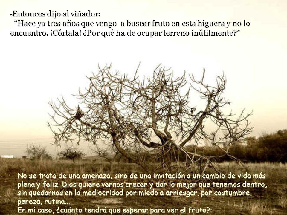 6 Jesús les propuso esta parábola: «Un hombre había plantado una higuera en su viña, pero cuando fue a buscar fruto en la higuera, no lo encontró. El