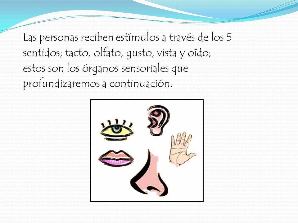 Las personas reciben estímulos a través de los 5 sentidos; tacto, olfato, gusto, vista y oído; estos son los órganos sensoriales que profundizaremos a