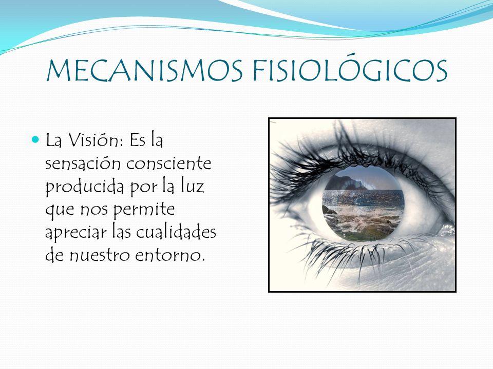 MECANISMOS FISIOLÓGICOS La Visión: Es la sensación consciente producida por la luz que nos permite apreciar las cualidades de nuestro entorno.