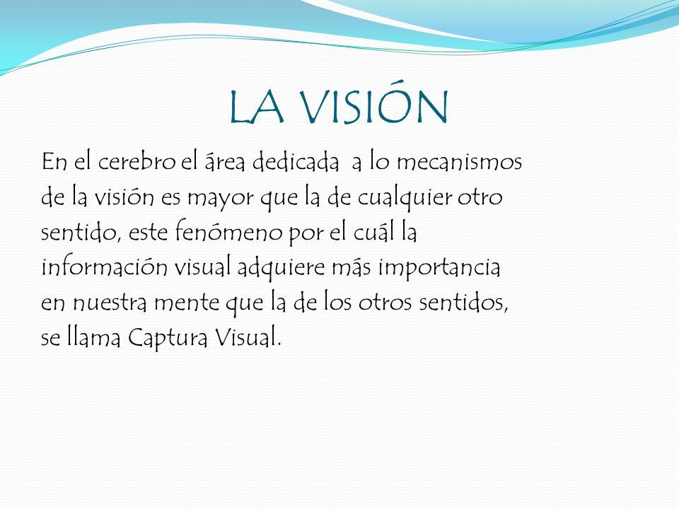 LA VISIÓN En el cerebro el área dedicada a lo mecanismos de la visión es mayor que la de cualquier otro sentido, este fenómeno por el cuál la informac