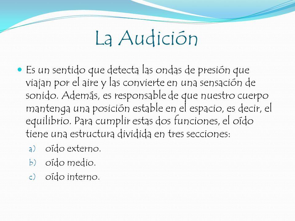 La Audición Es un sentido que detecta las ondas de presión que viajan por el aire y las convierte en una sensación de sonido. Además, es responsable d