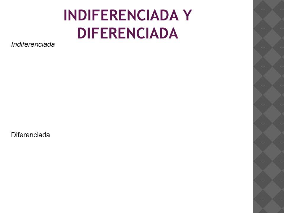 INDIFERENCIADA Y DIFERENCIADA Indiferenciada Diferenciada