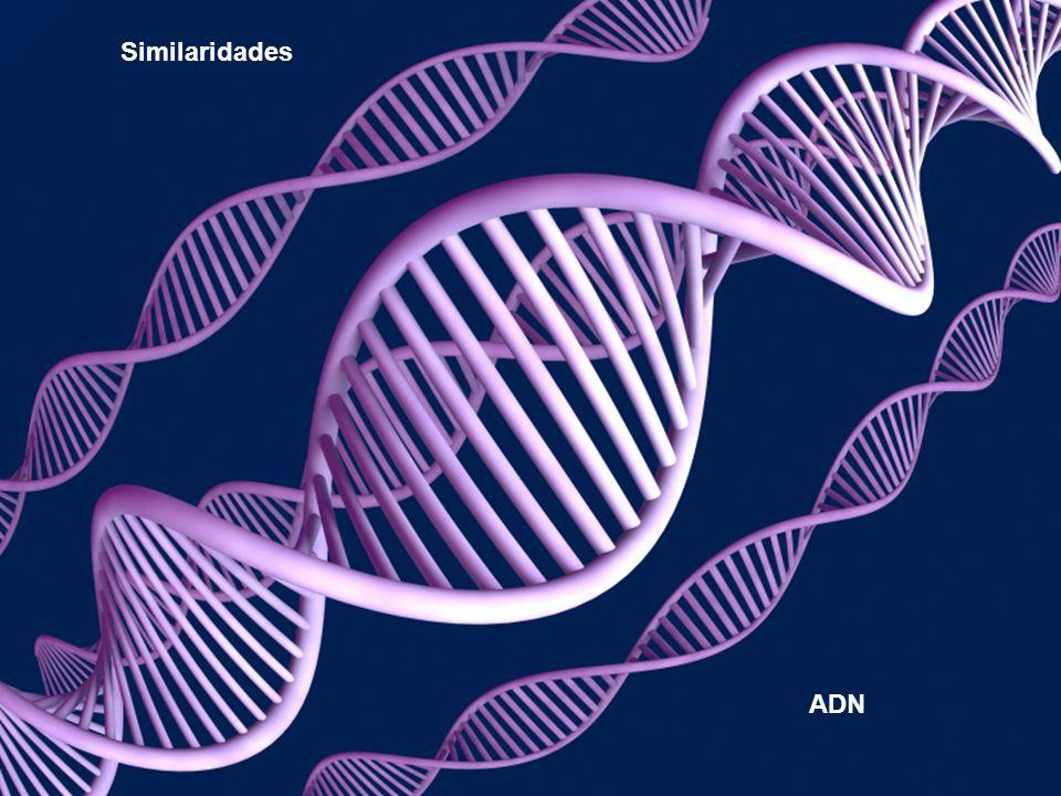 Similaridades ADN