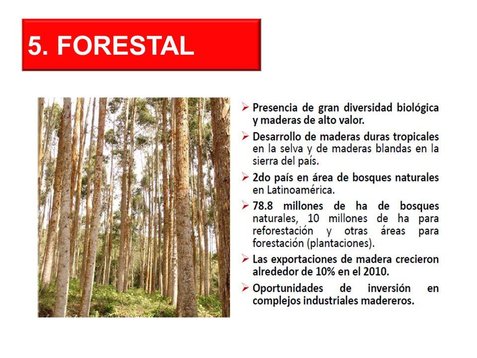 5. FORESTAL