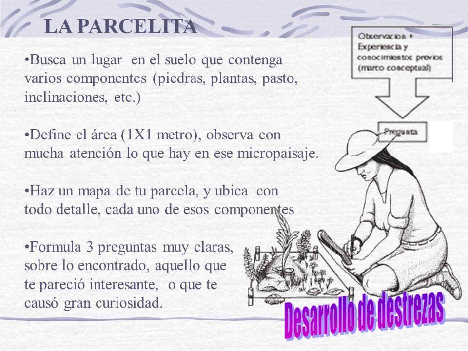 LA PARCELITA Busca un lugar en el suelo que contenga varios componentes (piedras, plantas, pasto, inclinaciones, etc.) Define el área (1X1 metro), obs