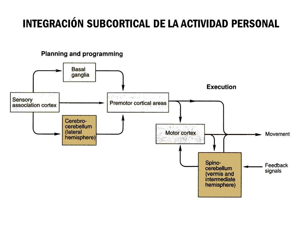 INTEGRACIÓN SUBCORTICAL DE LA ACTIVIDAD PERSONAL