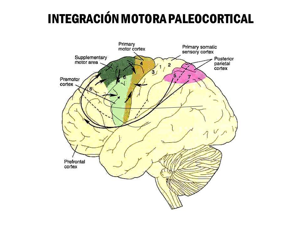 INTEGRACIÓN MOTORA PALEOCORTICAL