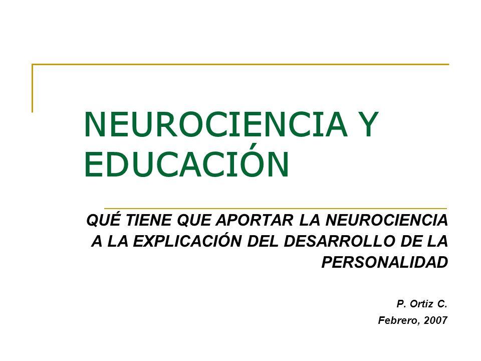 NEUROCIENCIA Y EDUCACIÓN QUÉ TIENE QUE APORTAR LA NEUROCIENCIA A LA EXPLICACIÓN DEL DESARROLLO DE LA PERSONALIDAD P. Ortiz C. Febrero, 2007