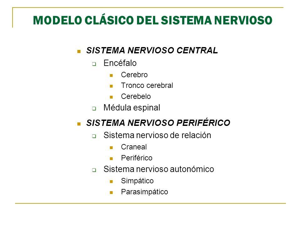 MODELO CLÁSICO DEL SISTEMA NERVIOSO SISTEMA NERVIOSO CENTRAL Encéfalo Cerebro Tronco cerebral Cerebelo Médula espinal SISTEMA NERVIOSO PERIFÉRICO Sist
