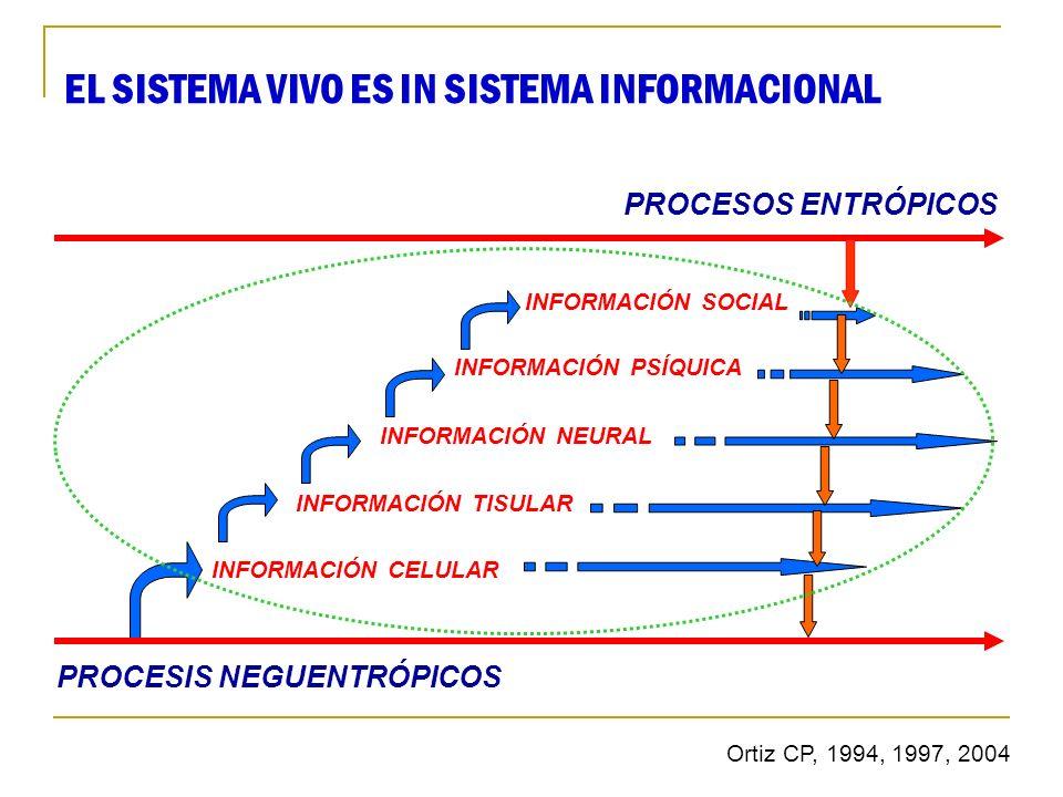 PROCESIS NEGUENTRÓPICOS INFORMACIÓN CELULAR INFORMACIÓN TISULAR INFORMACIÓN NEURAL INFORMACIÓN PSÍQUICA INFORMACIÓN SOCIAL PROCESOS ENTRÓPICOS EL SIST