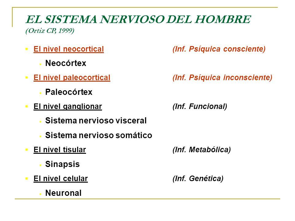 EL SISTEMA NERVIOSO DEL HOMBRE (Ortiz CP, 1999) El nivel neocortical(Inf. Psíquica consciente) Neocórtex El nivel paleocortical(Inf. Psíquica inconsci