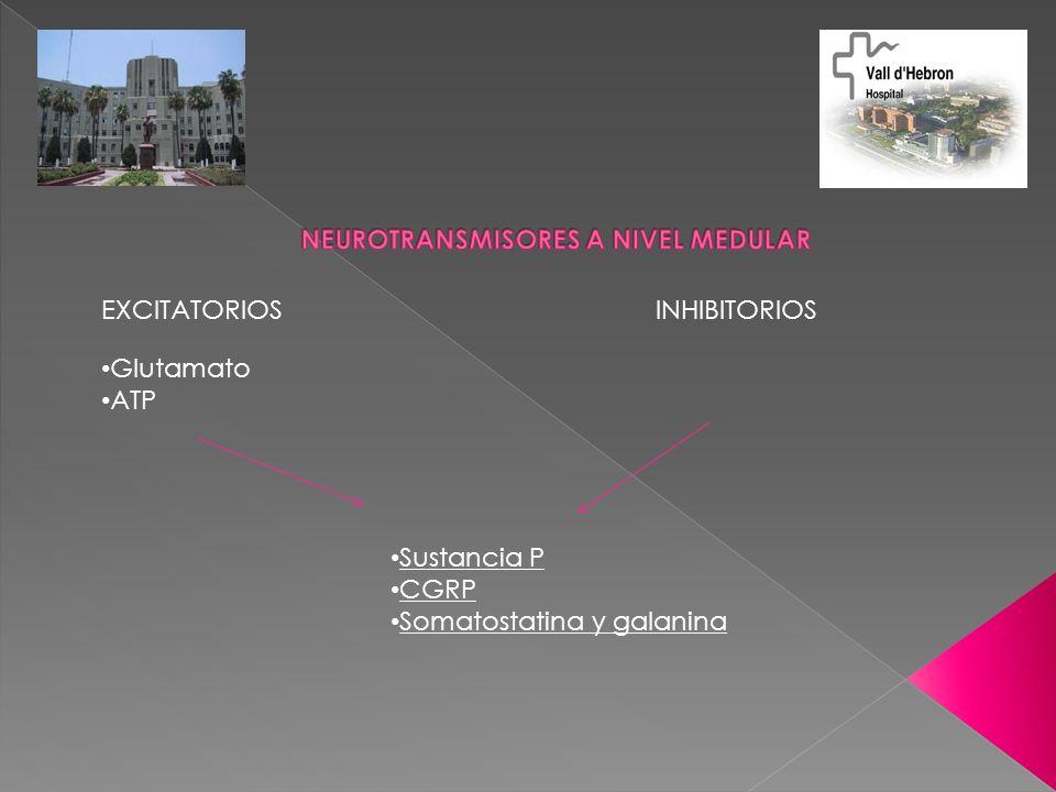 EXCITATORIOS INHIBITORIOS Glutamato ATP Sustancia P CGRP Somatostatina y galanina