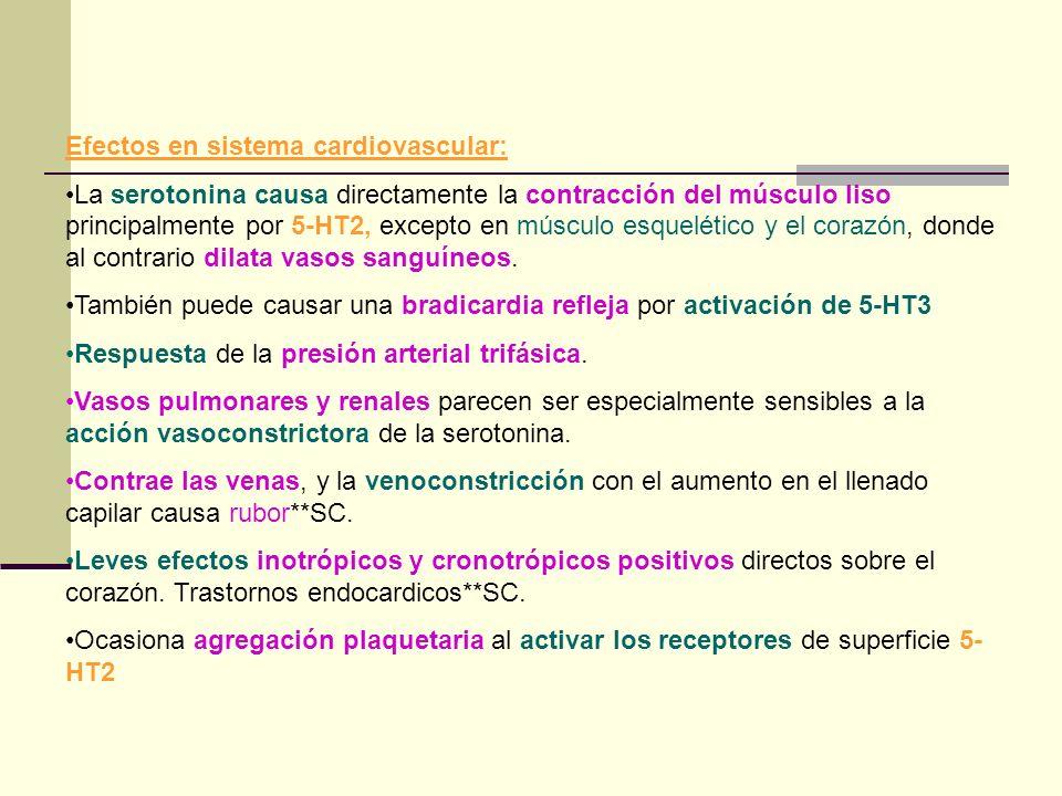 Efectos en sistema cardiovascular: La serotonina causa directamente la contracción del músculo liso principalmente por 5-HT2, excepto en músculo esque