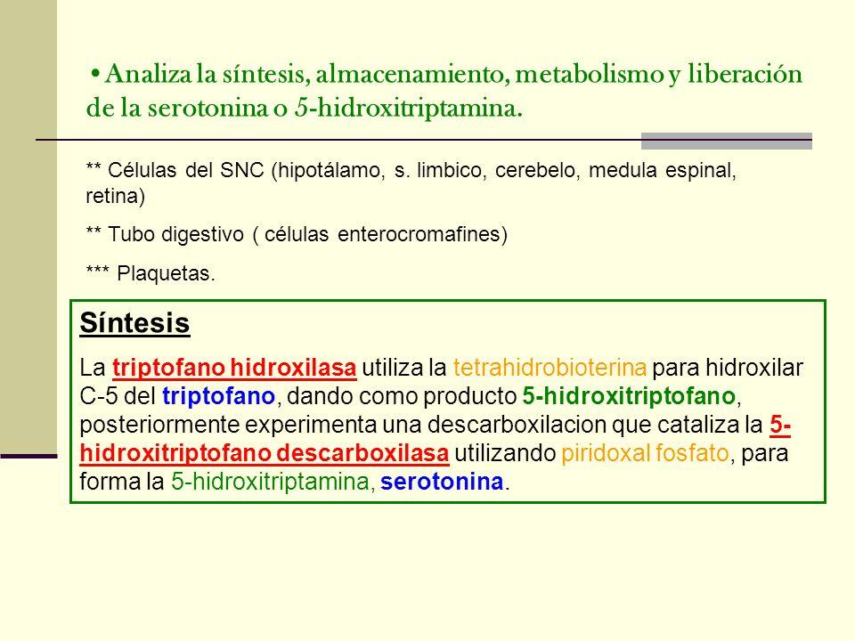 Analiza la síntesis, almacenamiento, metabolismo y liberación de la serotonina o 5-hidroxitriptamina. ** Células del SNC (hipotálamo, s. limbico, cere