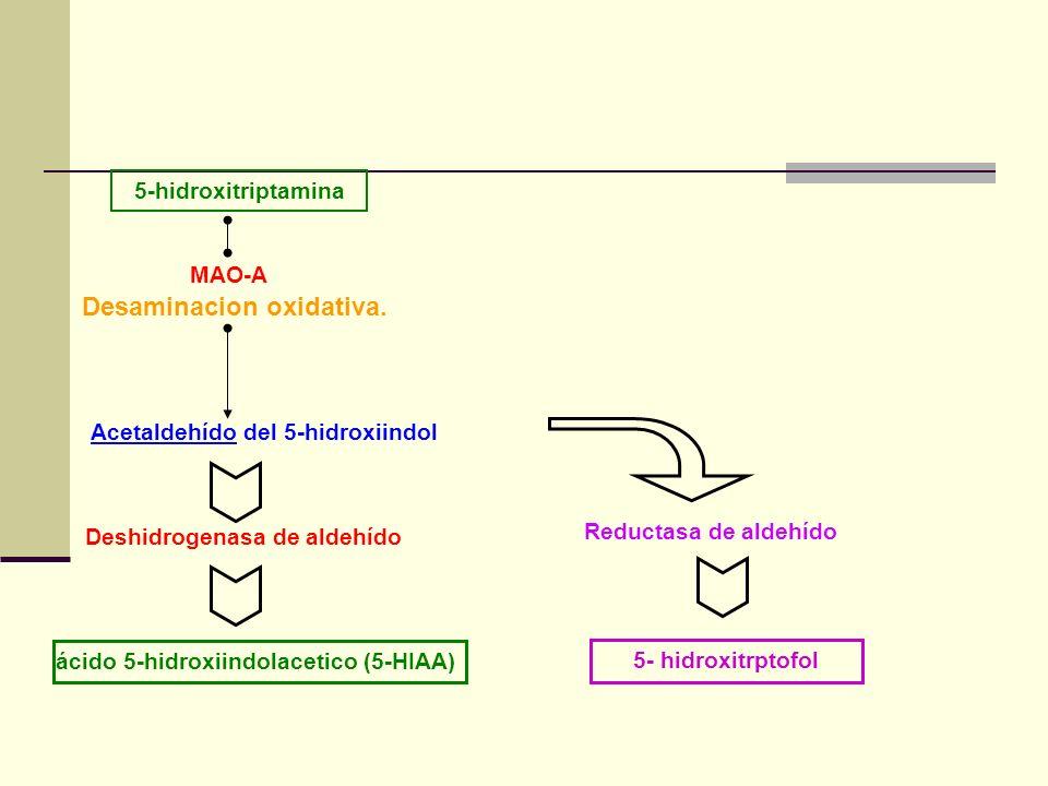 5-hidroxitriptamina MAO-A Deshidrogenasa de aldehído Reductasa de aldehído 5- hidroxitrptofol Desaminacion oxidativa. Acetaldehído del 5-hidroxiindol