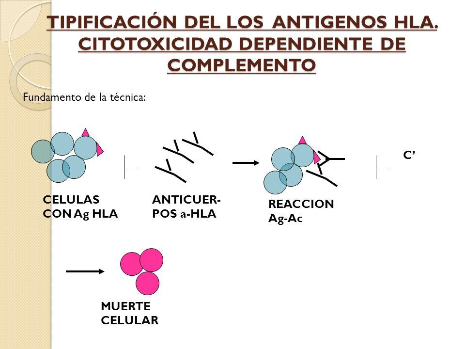 TIPIFICACIÓN DEL LOS ANTIGENOS HLA. CITOTOXICIDAD DEPENDIENTE DE COMPLEMENTO C CELULAS CON Ag HLA ANTICUER- POS a-HLA REACCION Ag-Ac MUERTE CELULAR Fu