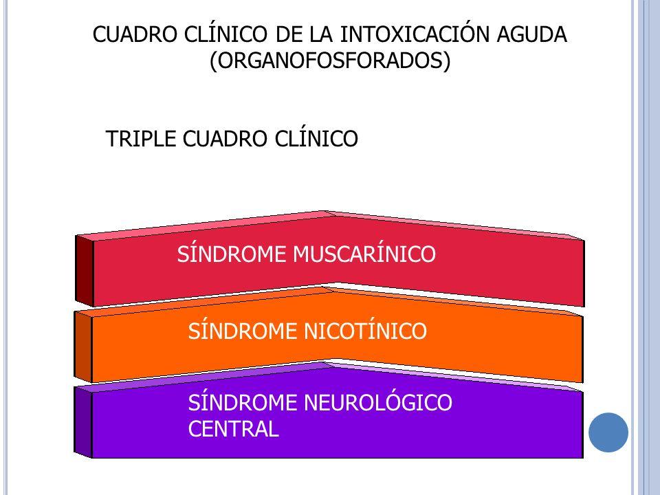 CUADRO CLÍNICO DE LA INTOXICACIÓN AGUDA (ORGANOFOSFORADOS) SÍNDROME MUSCARÍNICO SÍNDROME NICOTÍNICO SÍNDROME NEUROLÓGICO CENTRAL TRIPLE CUADRO CLÍNICO