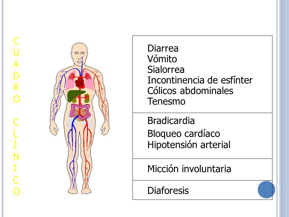 Vómito Tenesmo Diarrea Sialorrea Incontinencia de esfínter Cólicos abdominales Bradicardia Bloqueo cardíaco Hipotensión arterial Micción involuntaria