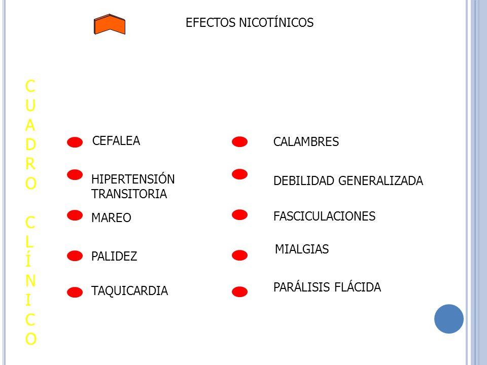 EFECTOS NICOTÍNICOS TAQUICARDIA CUADROCLÍNICOCUADROCLÍNICO CEFALEA HIPERTENSIÓN TRANSITORIA MAREO PALIDEZ CALAMBRES PARÁLISIS FLÁCIDA MIALGIAS FASCICU