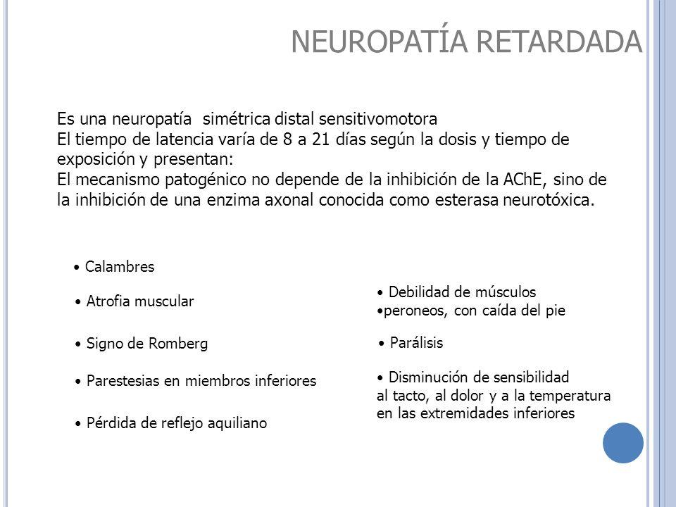 NEUROPATÍA RETARDADA Calambres Parestesias en miembros inferiores Debilidad de músculos peroneos, con caída del pie Disminución de sensibilidad al tac
