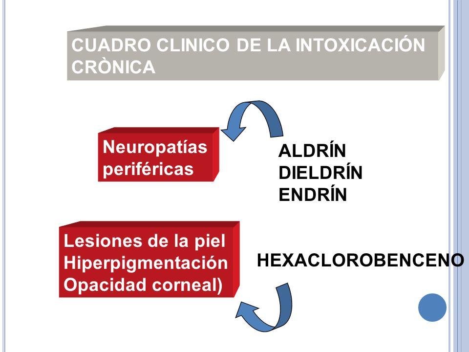 CUADRO CLINICO DE LA INTOXICACIÓN CRÒNICA Neuropatías periféricas Lesiones de la piel Hiperpigmentación Opacidad corneal) HEXACLOROBENCENO ALDRÍN DIEL