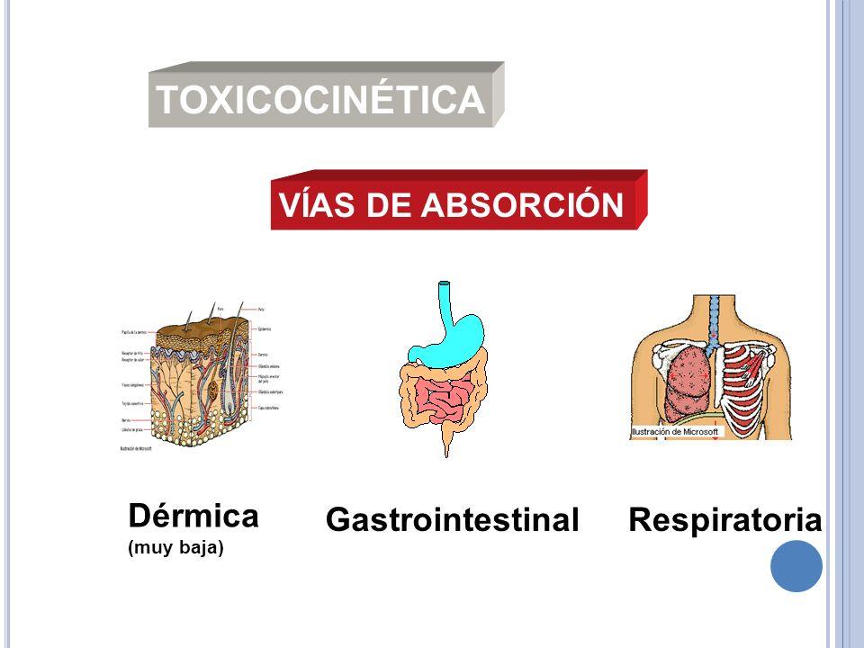 TOXICOCINÉTICA VÍAS DE ABSORCIÓN Dérmica (muy baja) GastrointestinalRespiratoria
