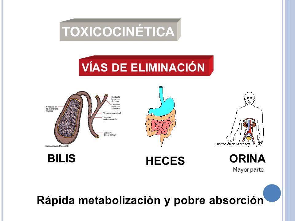 VÍAS DE ELIMINACIÓN BILIS HECES ORINA Mayor parte Mayor parte Rápida metabolizaciòn y pobre absorción TOXICOCINÉTICA