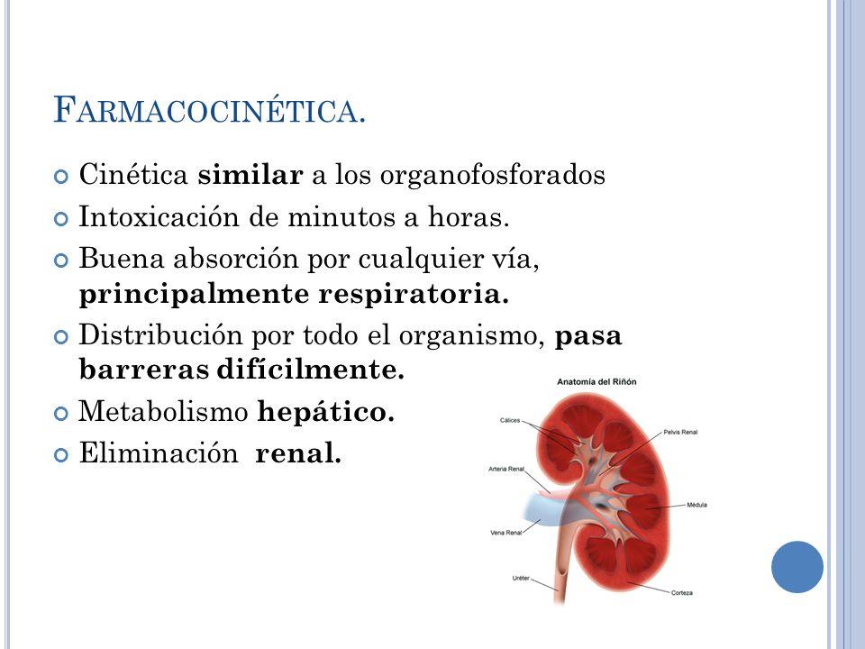 F ARMACOCINÉTICA. Cinética similar a los organofosforados Intoxicación de minutos a horas. Buena absorción por cualquier vía, principalmente respirato