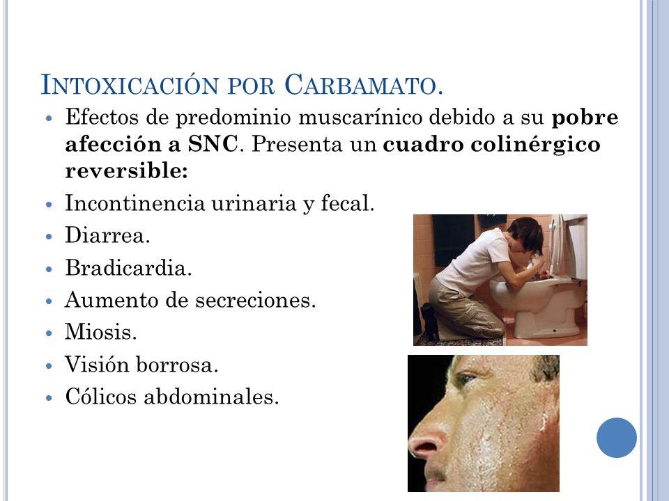 I NTOXICACIÓN POR C ARBAMATO. Efectos de predominio muscarínico debido a su pobre afección a SNC. Presenta un cuadro colinérgico reversible: Incontine