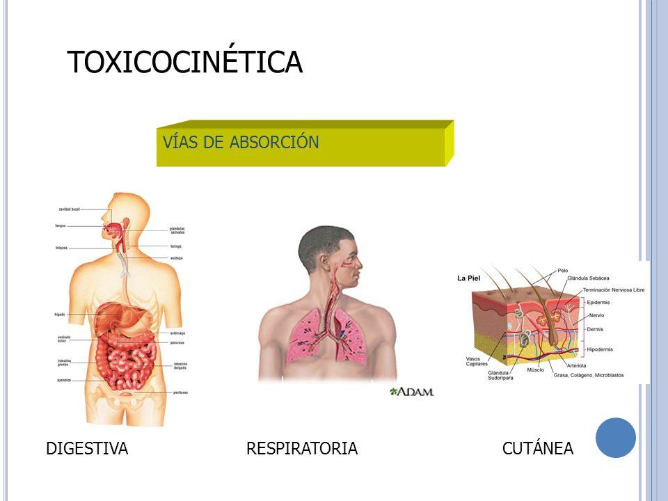 TOXICOCINÉTICA VÍAS DE ABSORCIÓN DIGESTIVARESPIRATORIACUTÁNEA