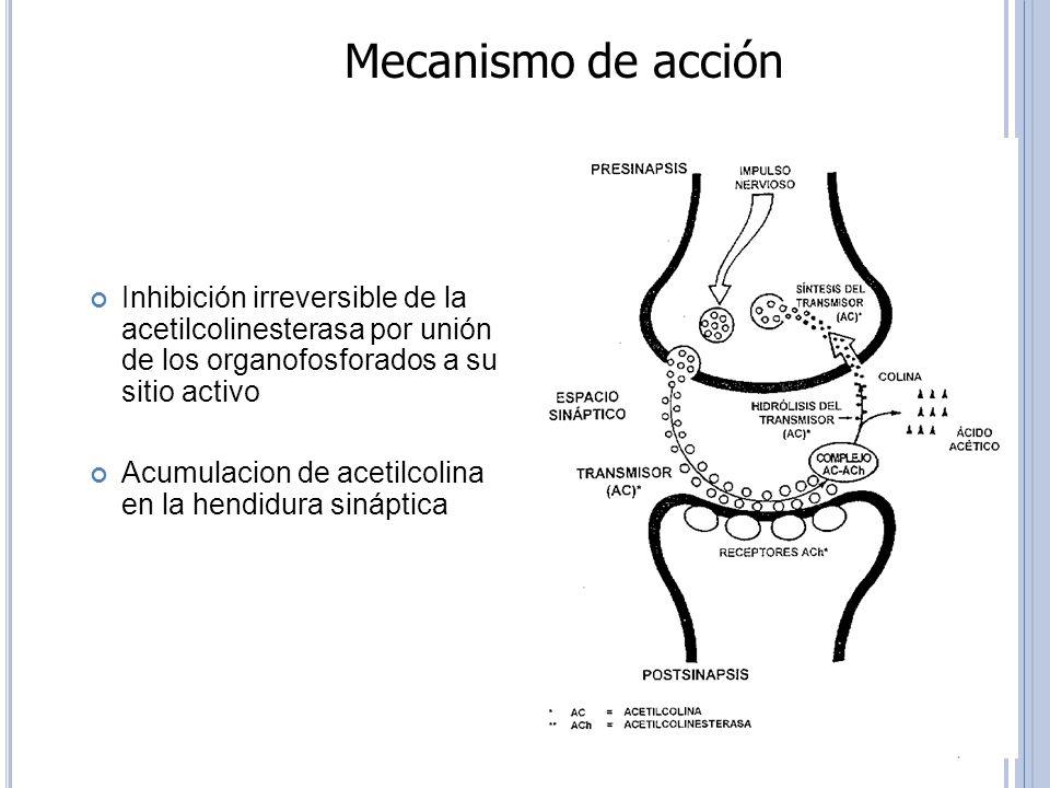 Mecanismo de acción Inhibición irreversible de la acetilcolinesterasa por unión de los organofosforados a su sitio activo Acumulacion de acetilcolina