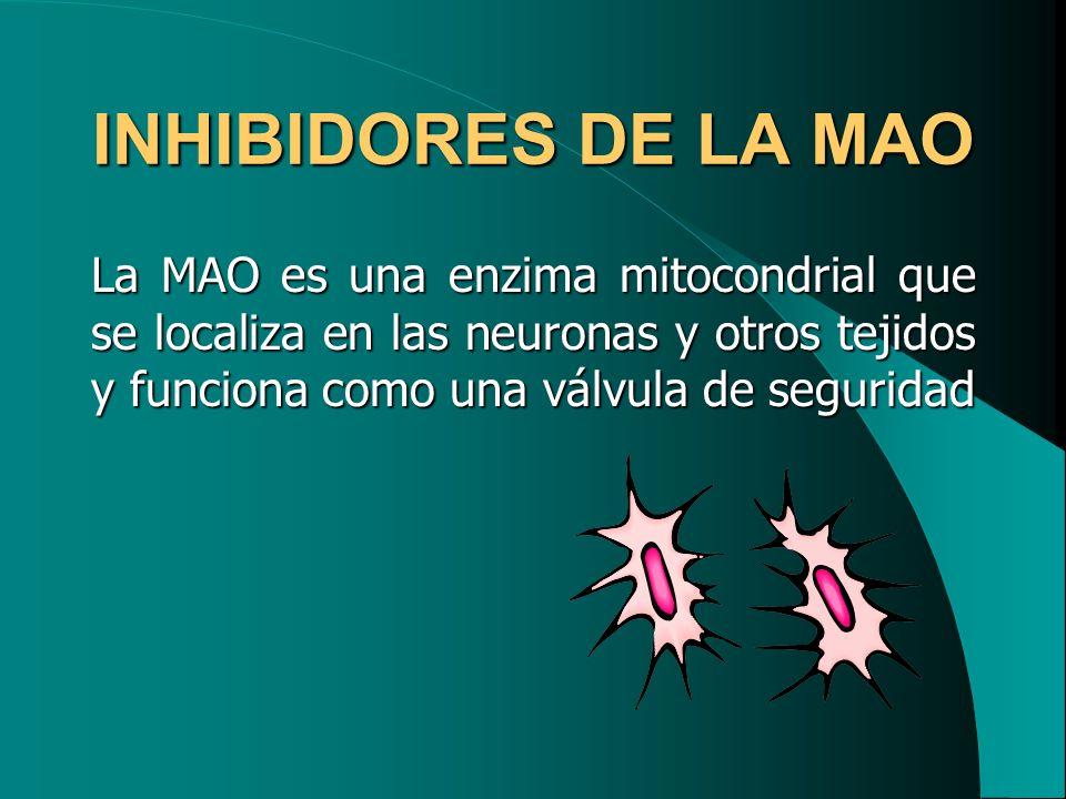 INHIBIDORES DE LA MAO La MAO es una enzima mitocondrial que se localiza en las neuronas y otros tejidos y funciona como una válvula de seguridad