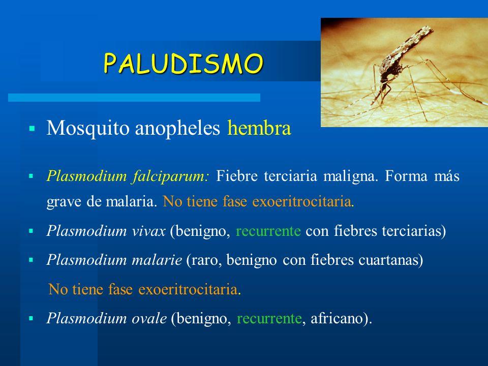 PALUDISMO PALUDISMO Mosquito anopheles hembra Plasmodium falciparum: Fiebre terciaria maligna. Forma más grave de malaria. No tiene fase exoeritrocita