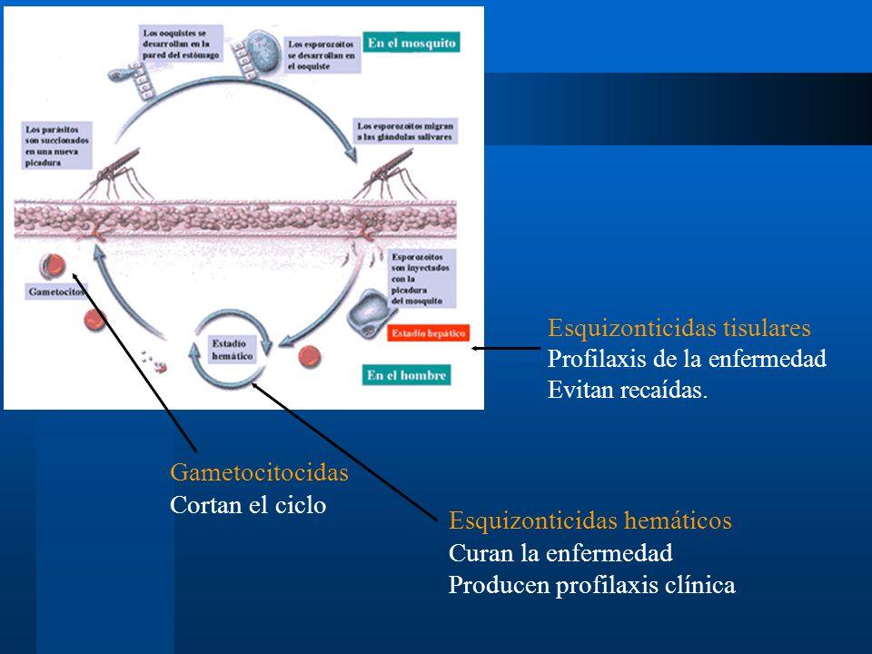 Gametocitocidas Cortan el ciclo Esquizonticidas hemáticos Curan la enfermedad Producen profilaxis clínica Esquizonticidas tisulares Profilaxis de la e