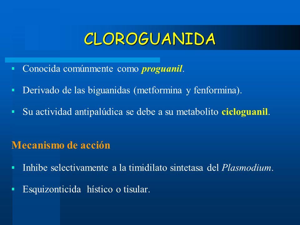 CLOROGUANIDA Conocida comúnmente como proguanil. Derivado de las biguanidas (metformina y fenformina). Su actividad antipalúdica se debe a su metaboli