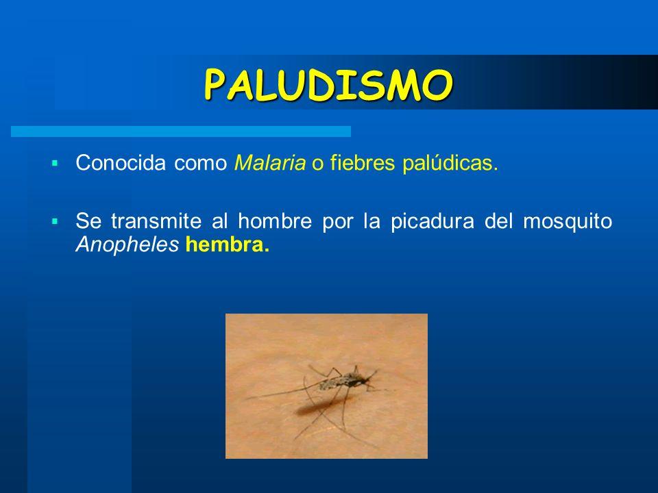 PALUDISMO Conocida como Malaria o fiebres palúdicas. Se transmite al hombre por la picadura del mosquito Anopheles hembra.