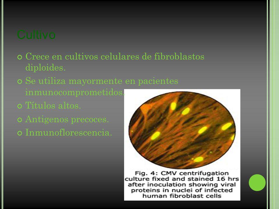 Cultivo Crece en cultivos celulares de fibroblastos diploides. Se utiliza mayormente en pacientes inmunocomprometidos. Títulos altos. Antigenos precoc