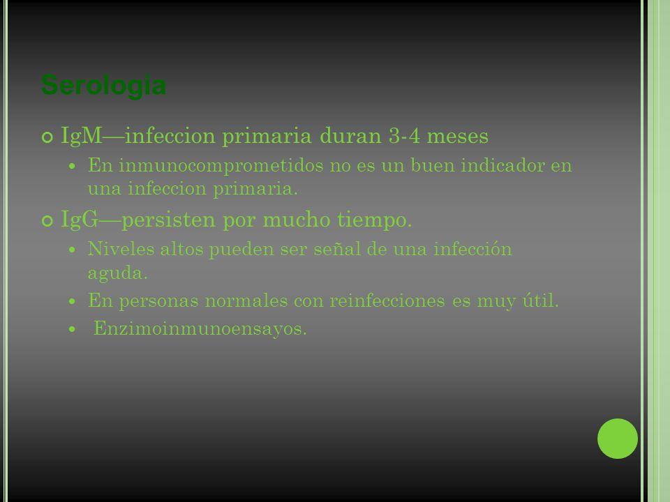 Serologia IgMinfeccion primaria duran 3-4 meses En inmunocomprometidos no es un buen indicador en una infeccion primaria. IgGpersisten por mucho tiemp